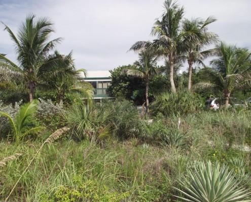 grünes Gebiet