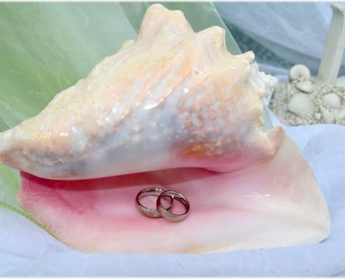 Ringe in Muschel