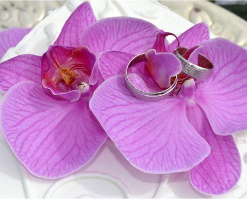 Ringe in Hochzeitstorte