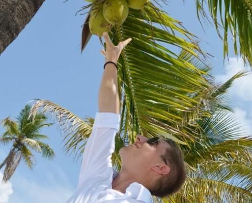 Kokosnüsse Palme