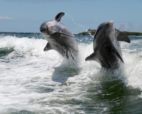 Delfinhochzeit Florida