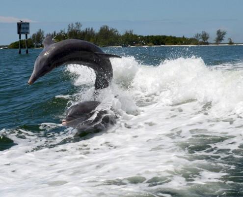 Florida Delfine