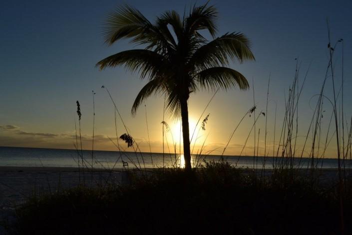Palme nachts